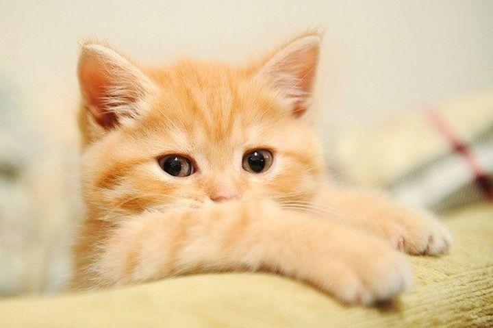 Кот хитрый картинки