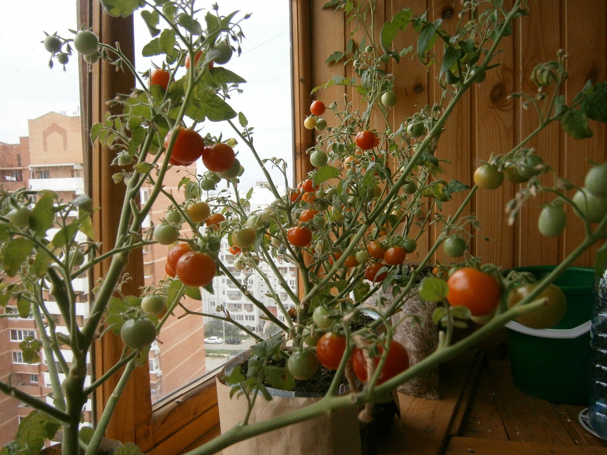 Огород на балконе своими руками: фото и видео.