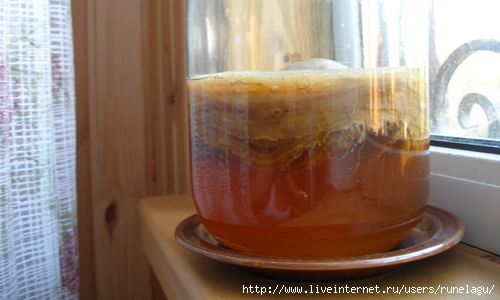 Гриб из чая как сделать 18