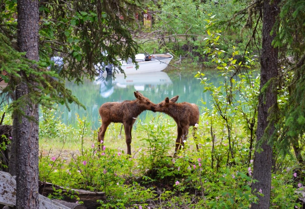 занимательные картинки о лесе них