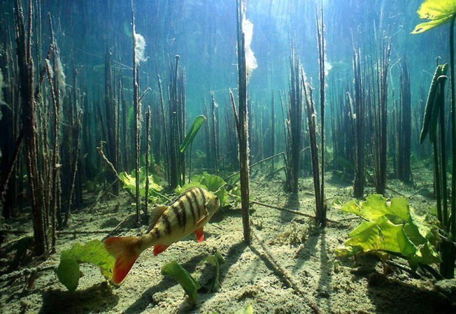 Дню города, картинка подводный мир реки