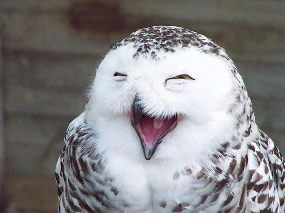 Картинки по запросу улыбающиеся животные