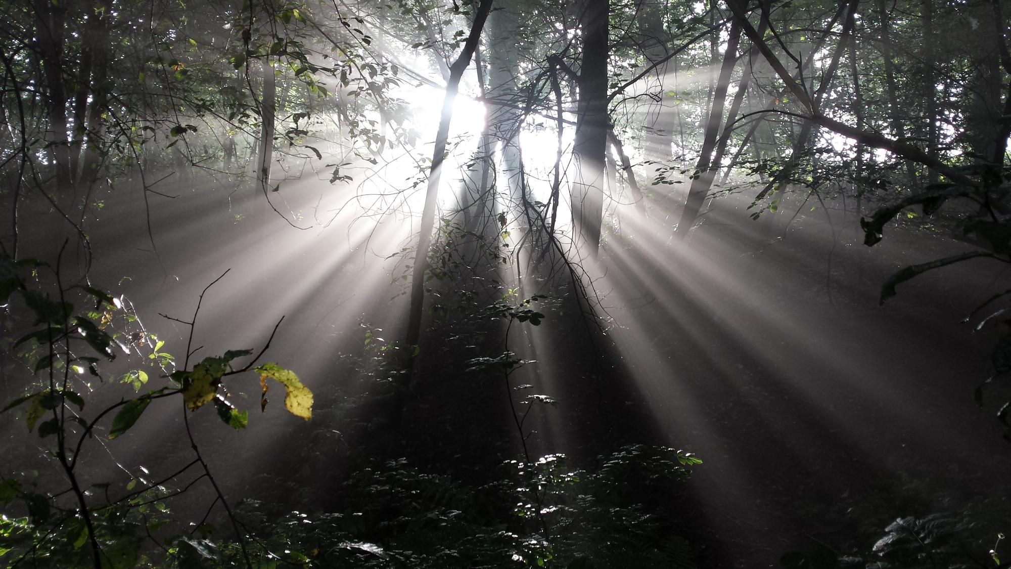 Луч света фото картинки