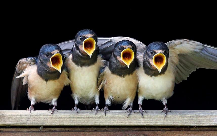 Картинки, прикольные птицы видео