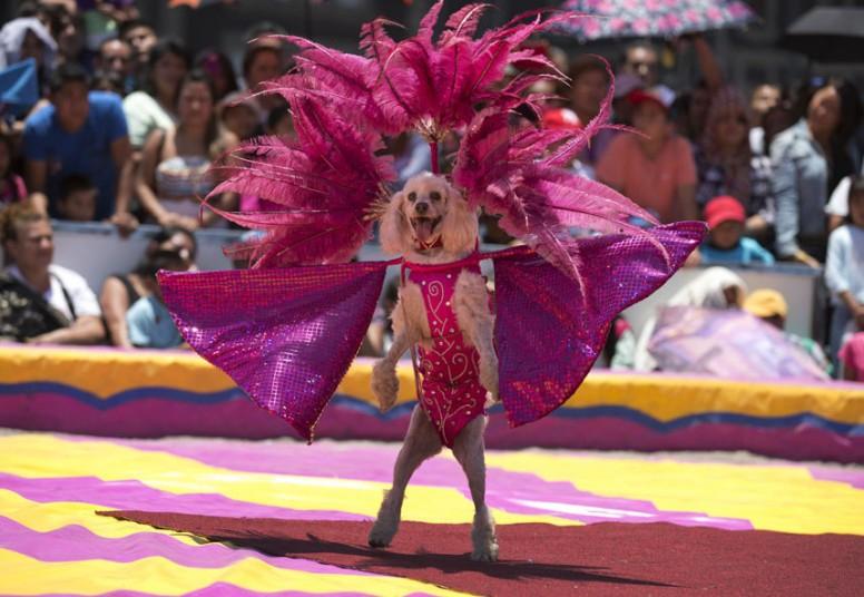 цирк собаки фото девушки встают