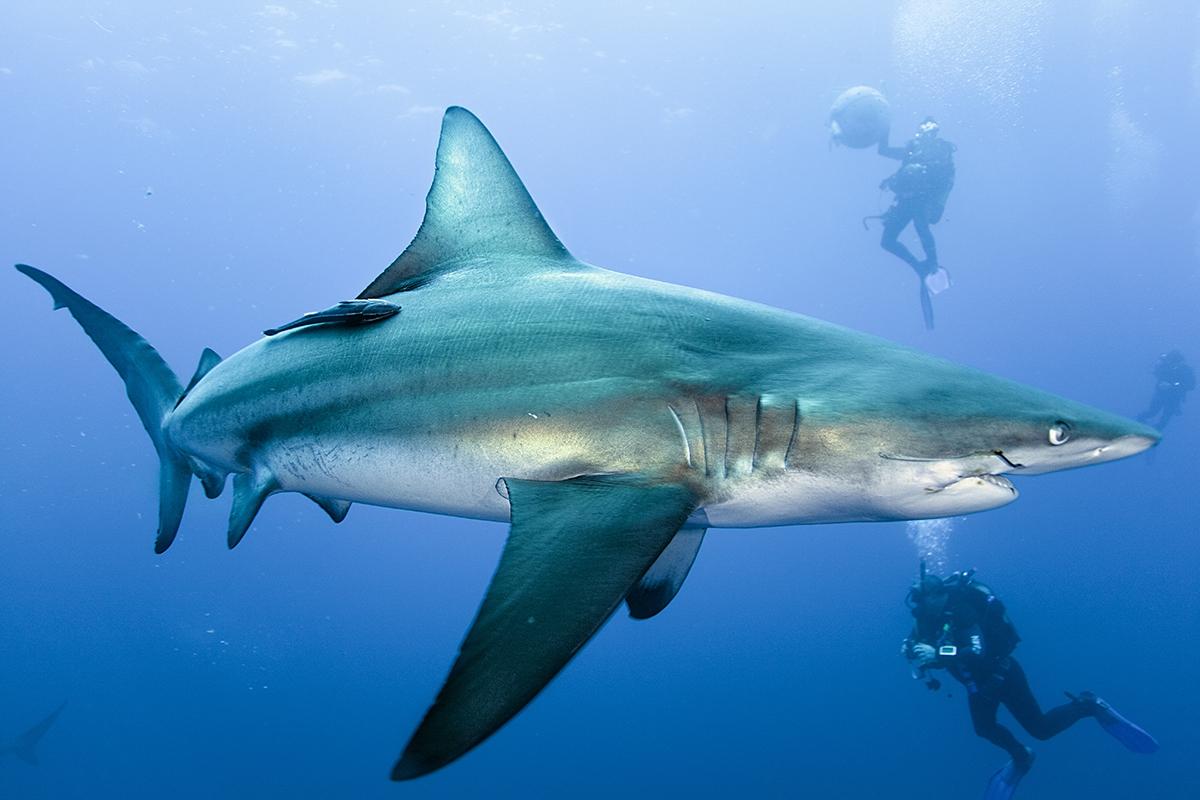 думаете акулы фото с названиями может