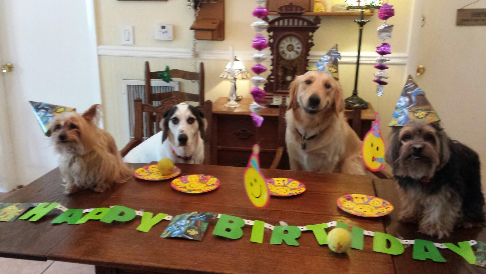 Открытки с днем рождения собачками