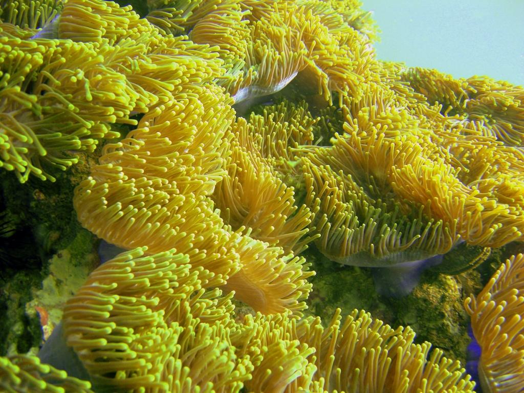 Самые удивительные коралловые рифы