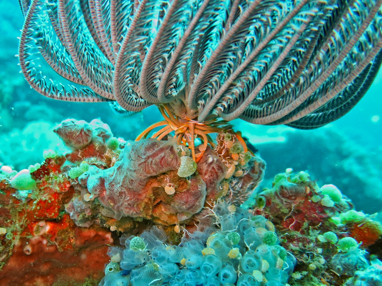 coral reefs disappearing beauty Rent-a-reef program have you admired those beautiful saltwater or freshwater aquariums but been concerned that you can't afford it or don't know how to care for one see our reefs we will be closed on labor day september 3  come happy 4th of july we are closed today.