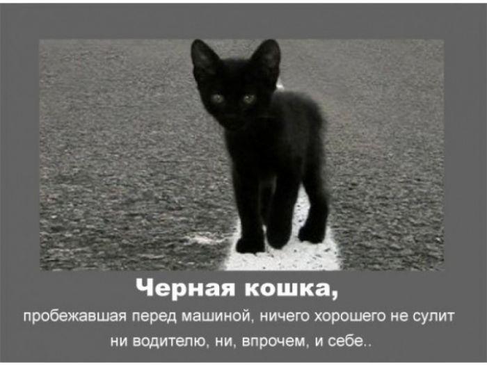 черная кошка обошла вокруг примета Поиск, развитие ведение