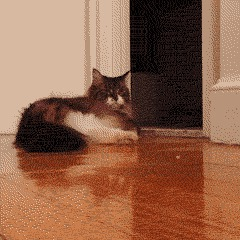 how to stop cat from peeing on couch