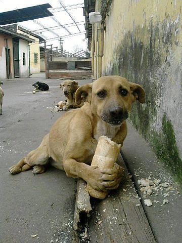 С днём защиты животных!