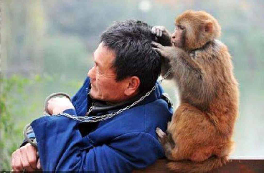 выполнения картинка как животные помогают друг другу решил воспользоваться