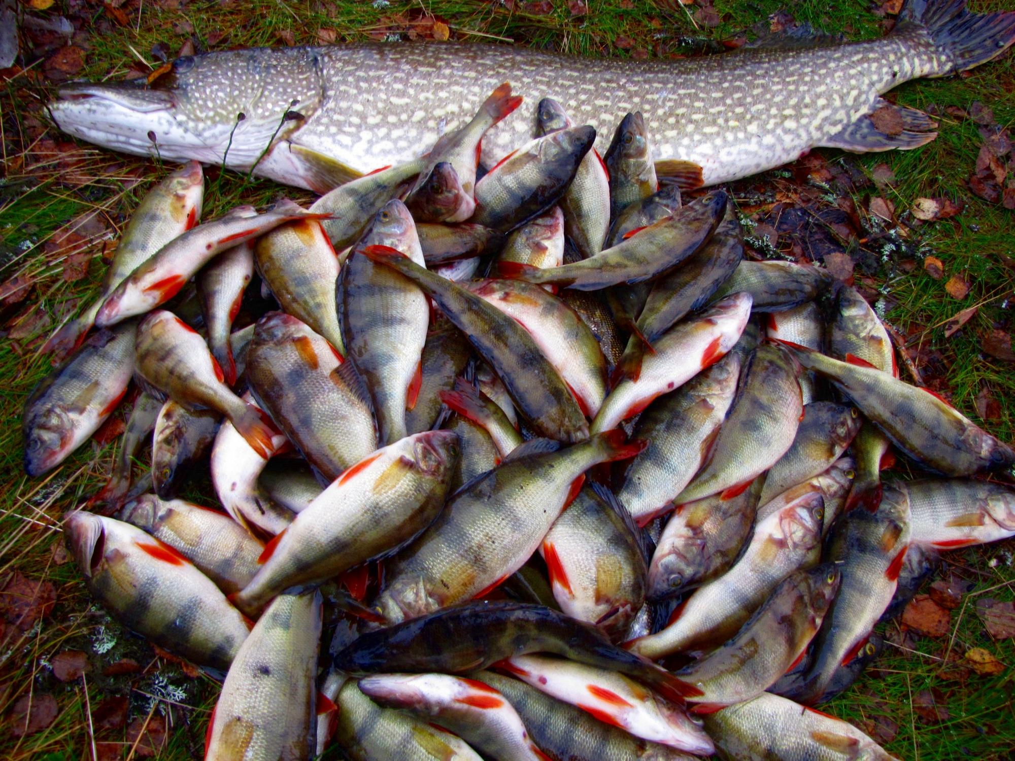 День, картинки как улов