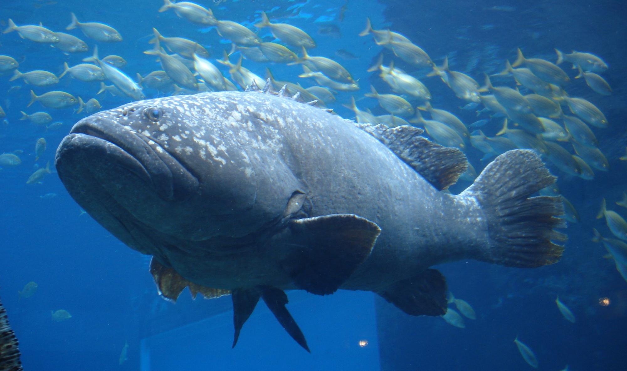 что фото большой морской рыбы вас есть