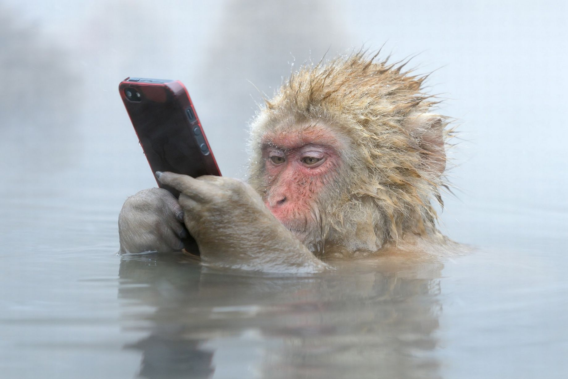 Смешные картинки а мобильник