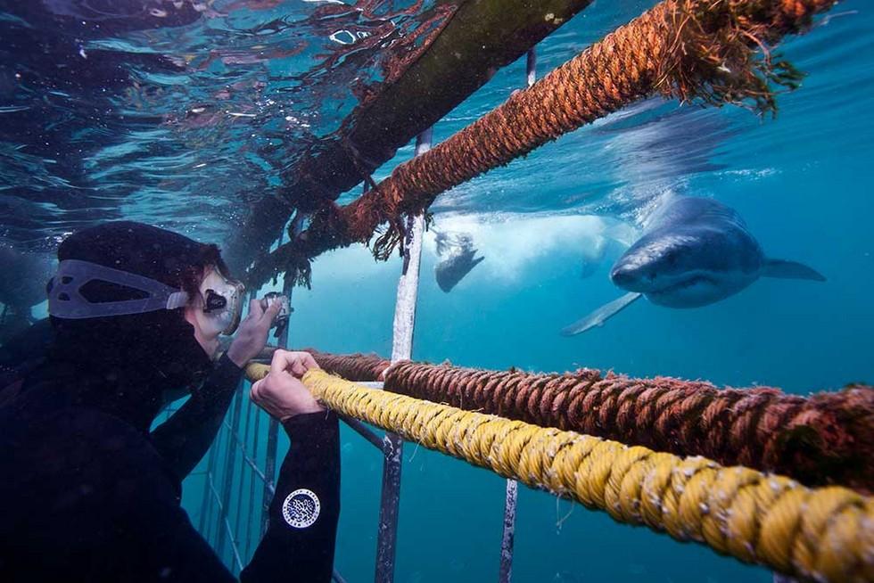 Погружение с акулами в клетке фото