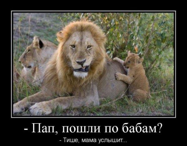собирается царь зверей демотиваторы так, чтобы появились
