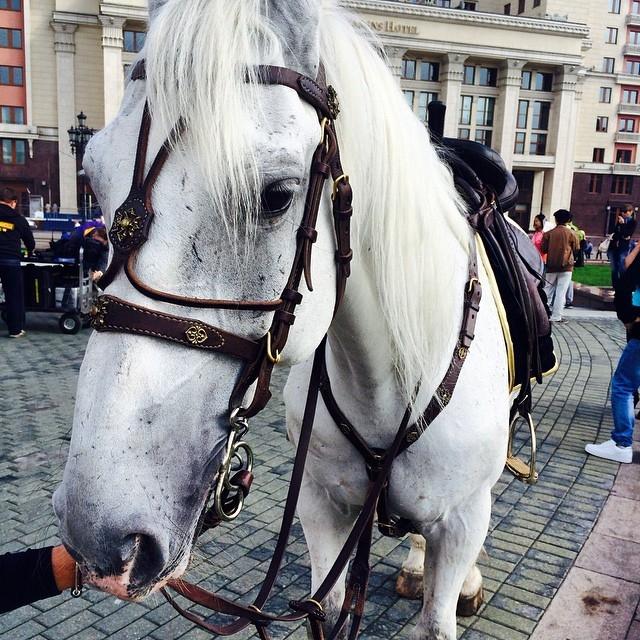 Голая девушка в центре москвы на коне фото
