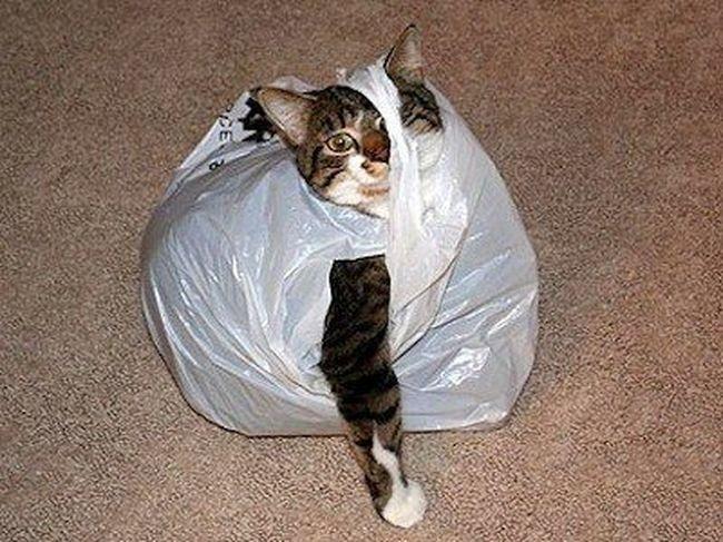 i lost my cat runescape