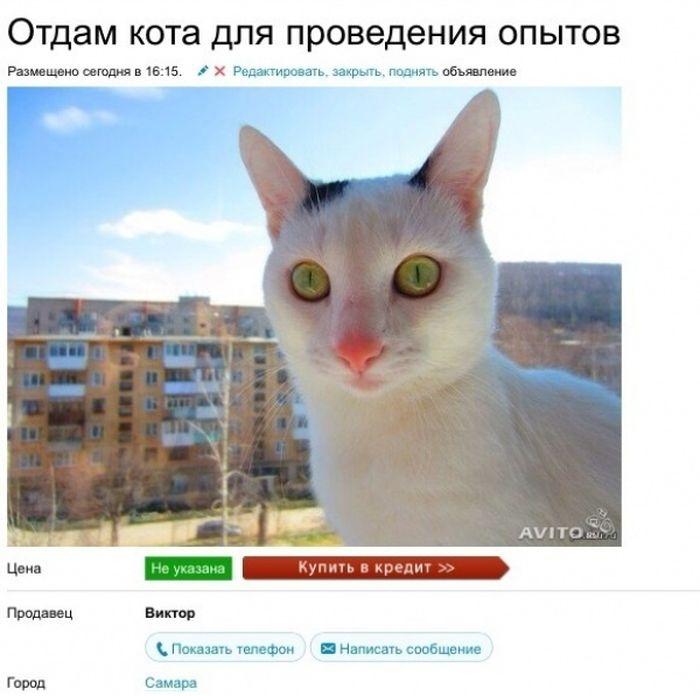 Продается кошка дура картинка