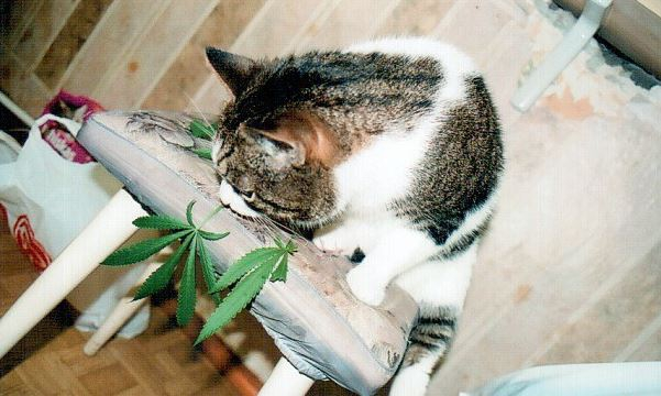 можно курить марихуану если болеешь чем то