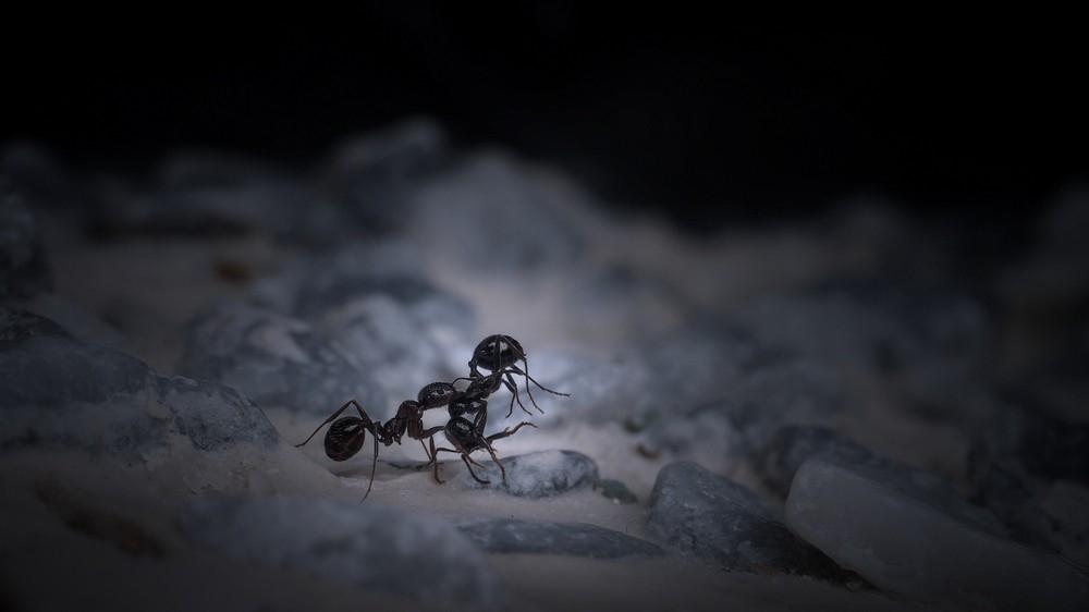 Картинки по запросу Тонущие муравьи
