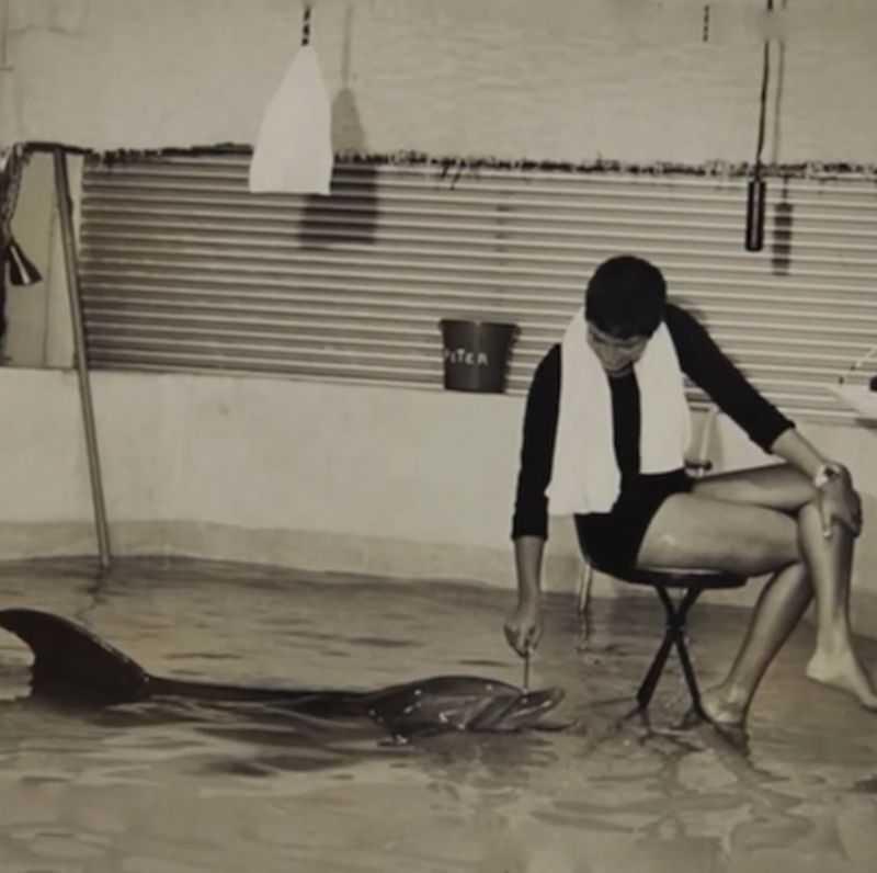 Секс между дельфином и женщиной