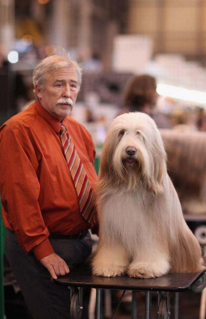 dog that looks human - 650×1005