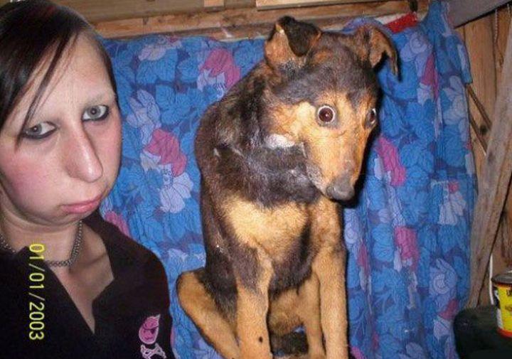 Хозяева и их собаки