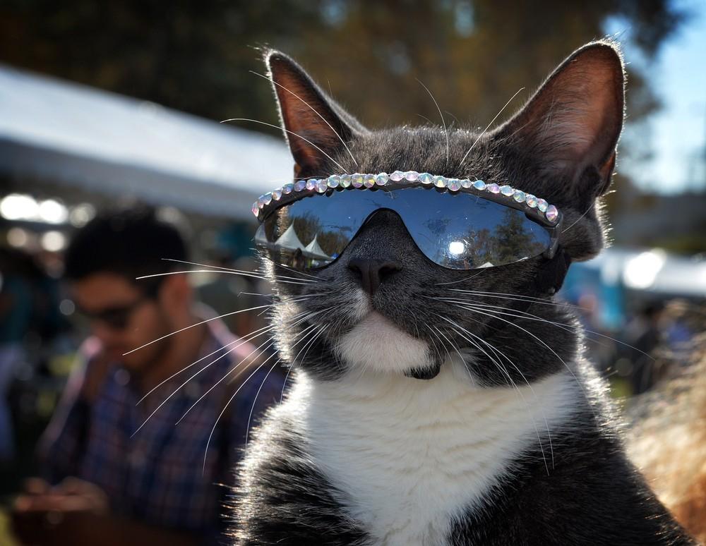Картинки про котов крутые, сертификаты