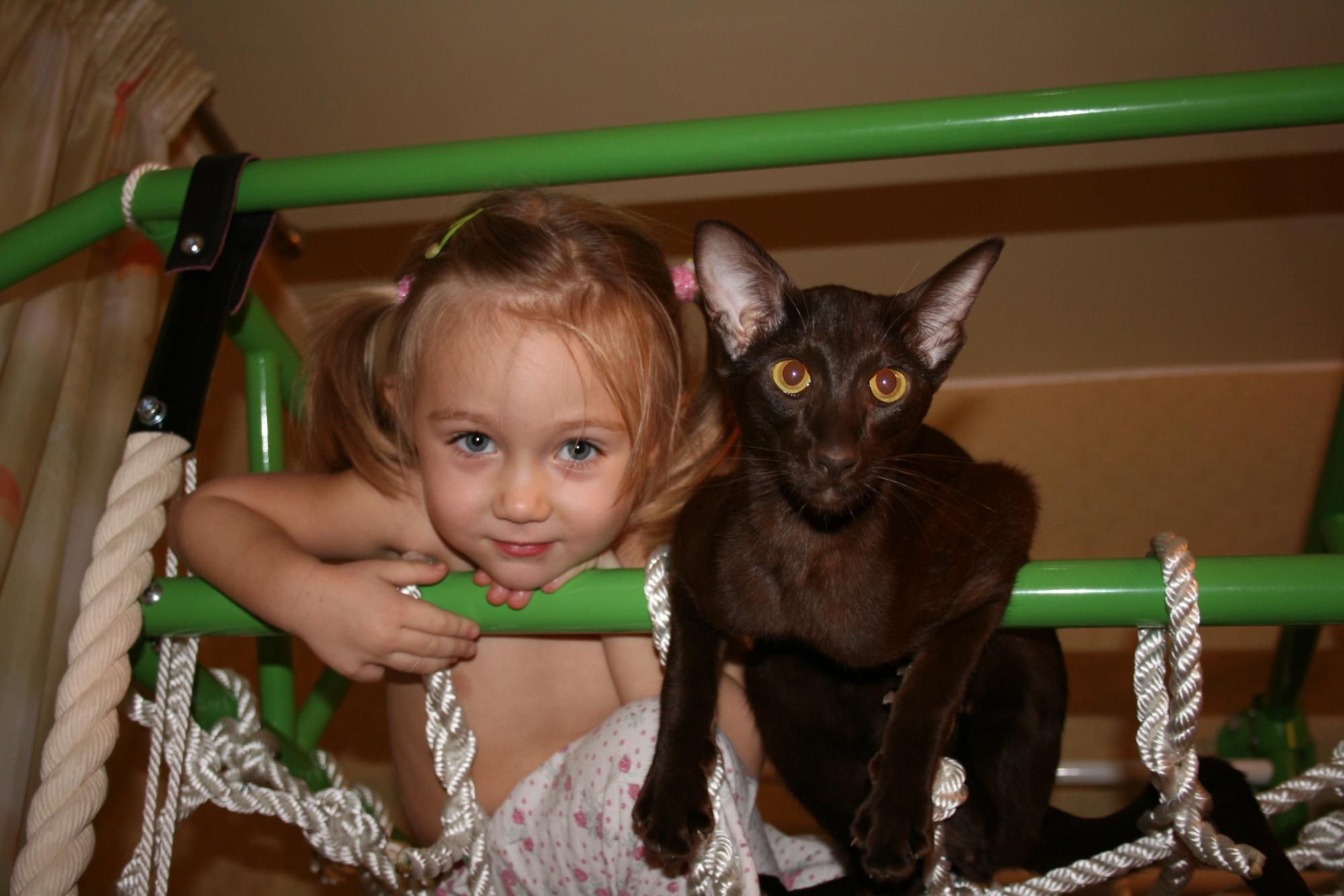 участке прикольные картинки кошек с детьми узоре изобразить молнию