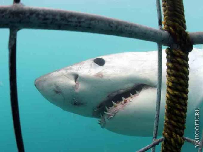 Игра где акула ест людей и рыб скачать