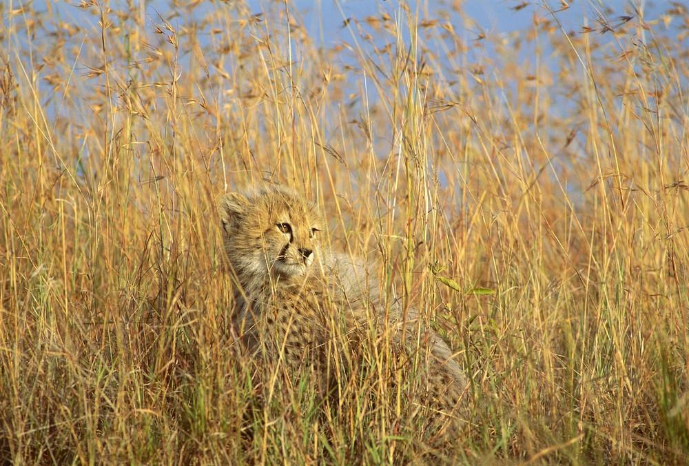 hidden animal games learn animal camouflage