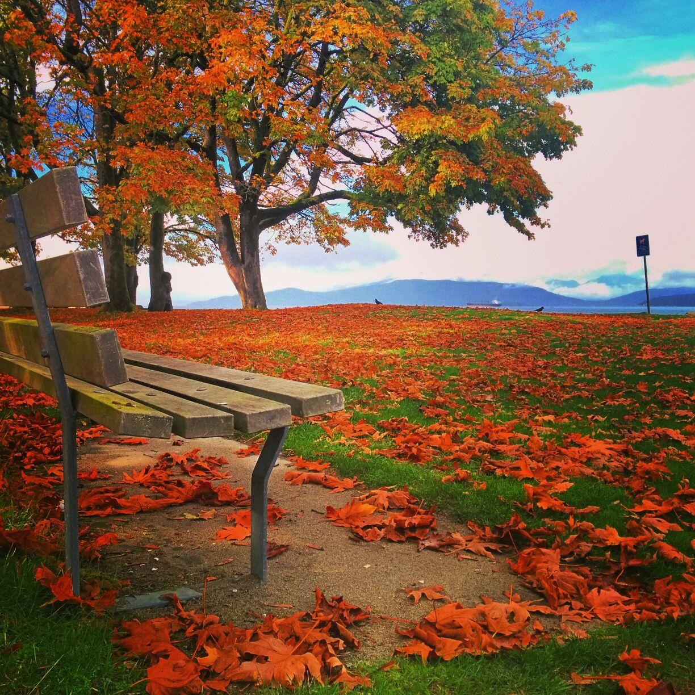 знает, картинки золотая осень красивые необычные сгоревшего