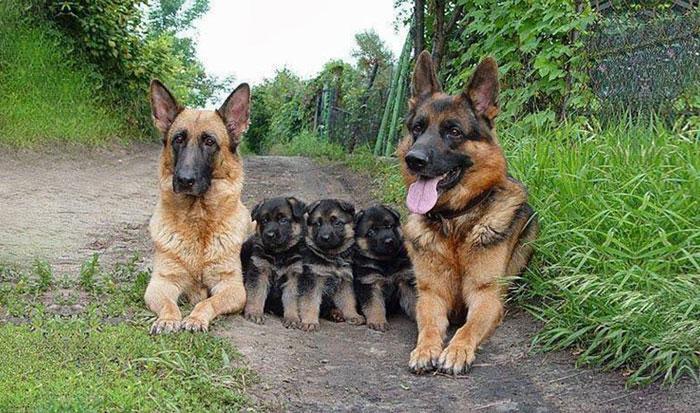 Картинки по запросу Семейные портреты животных