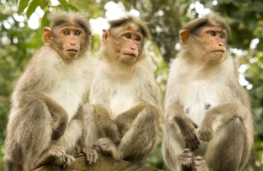 картинки группы обезьян суде маленьком