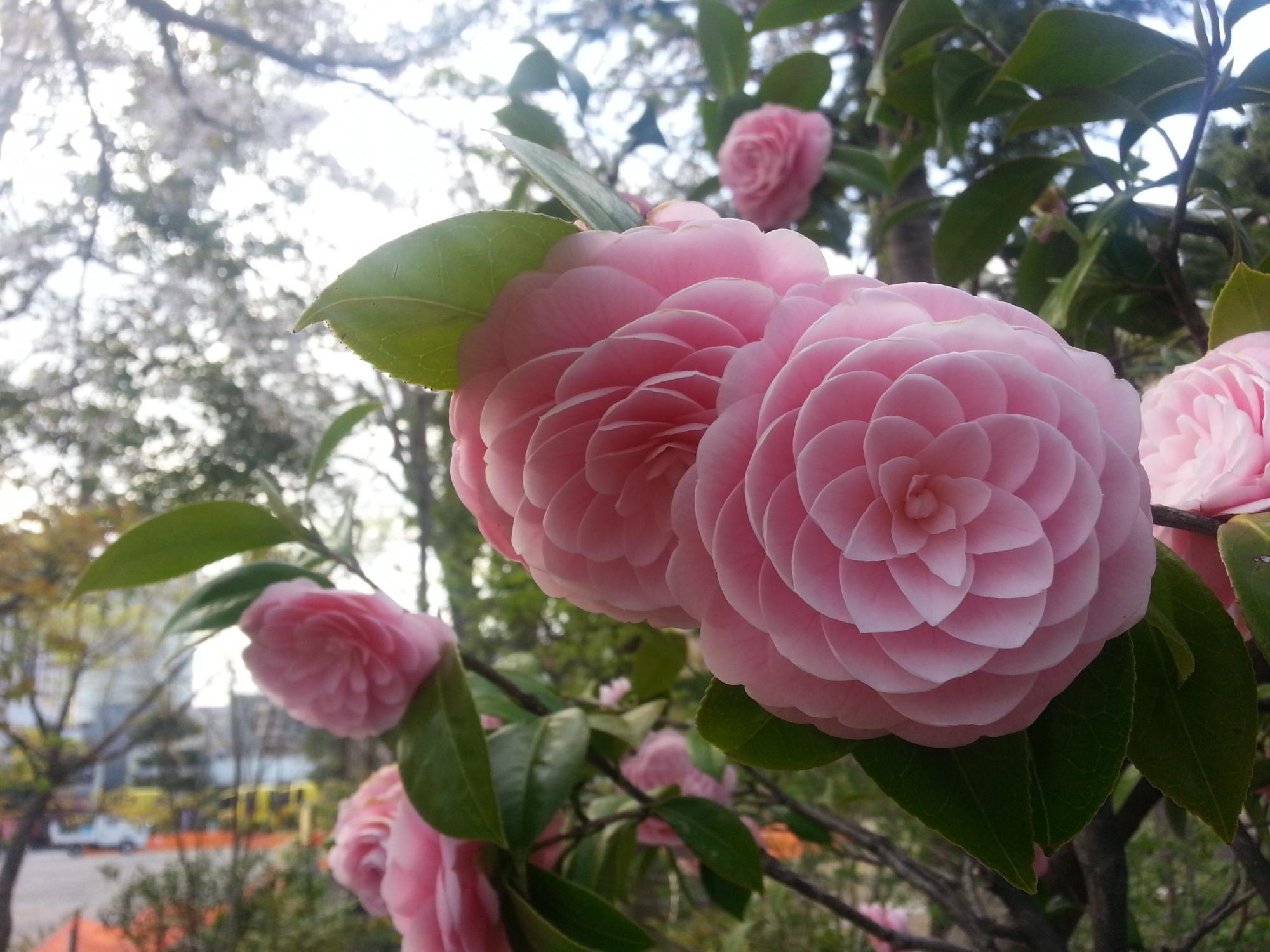 Картинки красивых цветов и редких