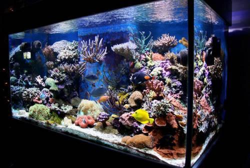 Морской аквариум своими руками: что для этого нужно?