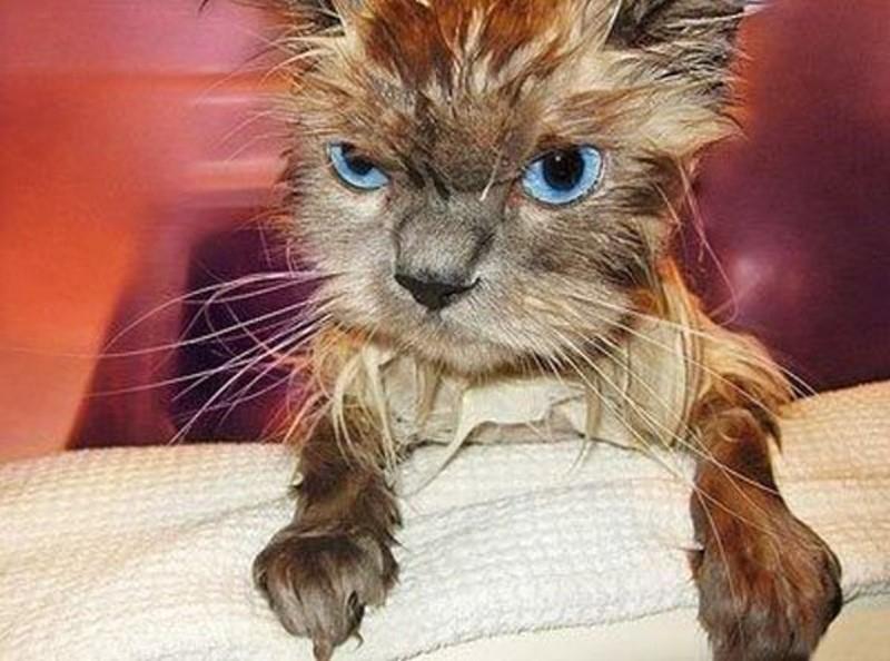 Веселые картинки облезлый кот