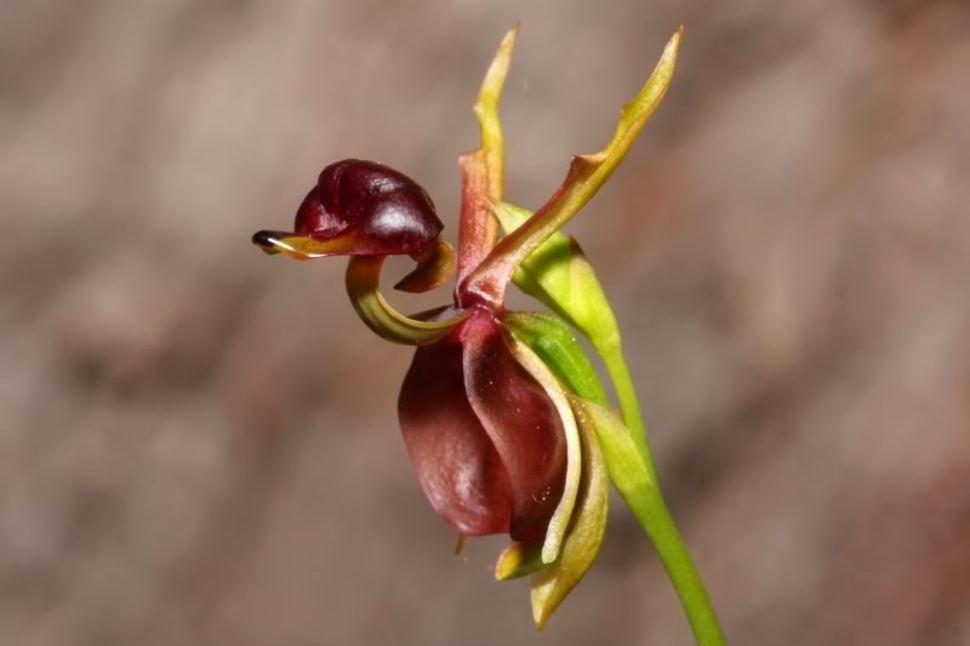Орхидеи самые сексапильные цветы в мире