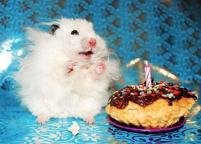 Открытки с днем рождения смешные с животными, картинках яблочный спас