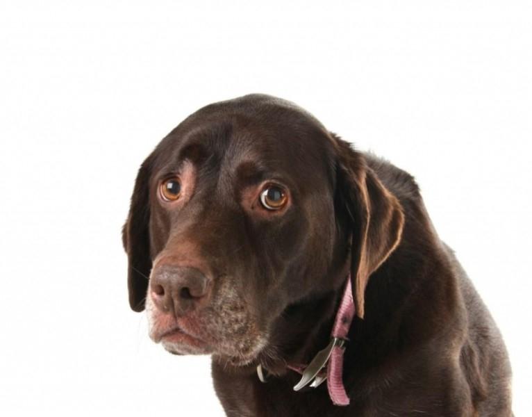 Любопытные факты о собаках интересно, познавательно, собаки, факты