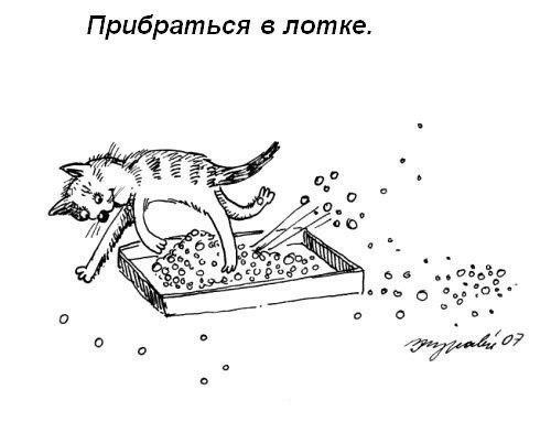 Правила кошачьего этикета People Are Awesome, cat