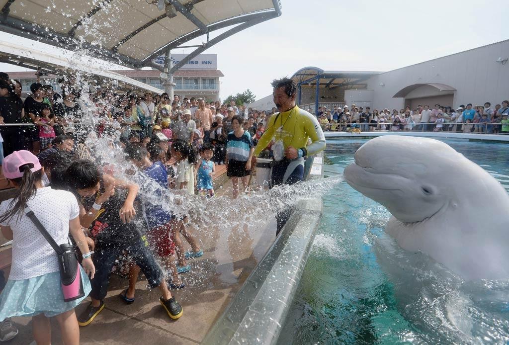 Приколы с дельфинами картинки, днем