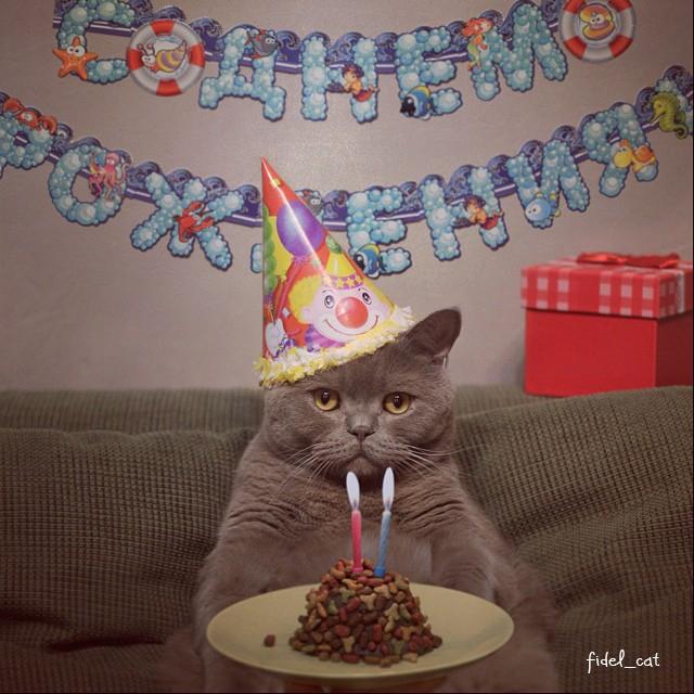 Картинки на день рождения с котами, анимацию картинку