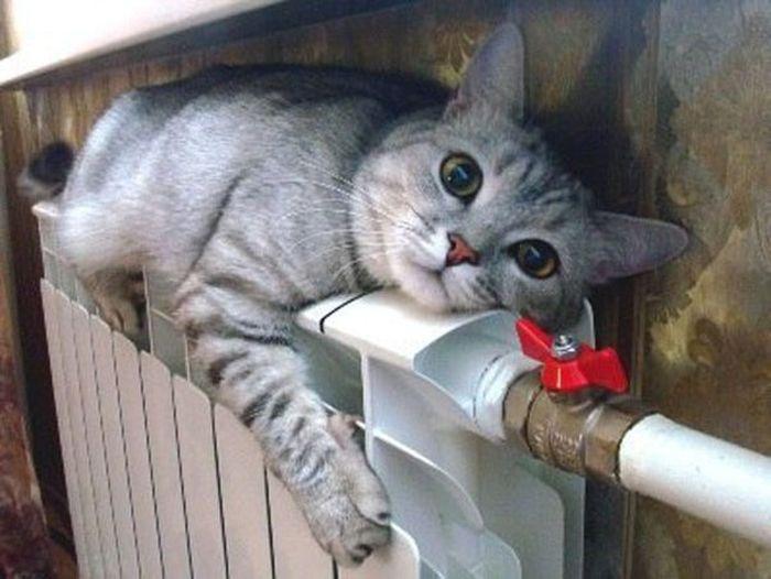 Картинки по запросу котенок у батареи