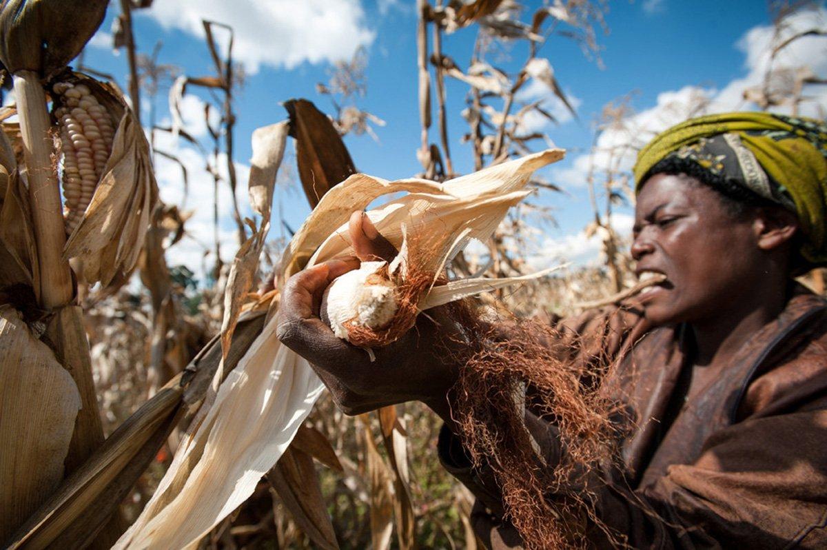 картинки цветов развивающихся стран узнать, где