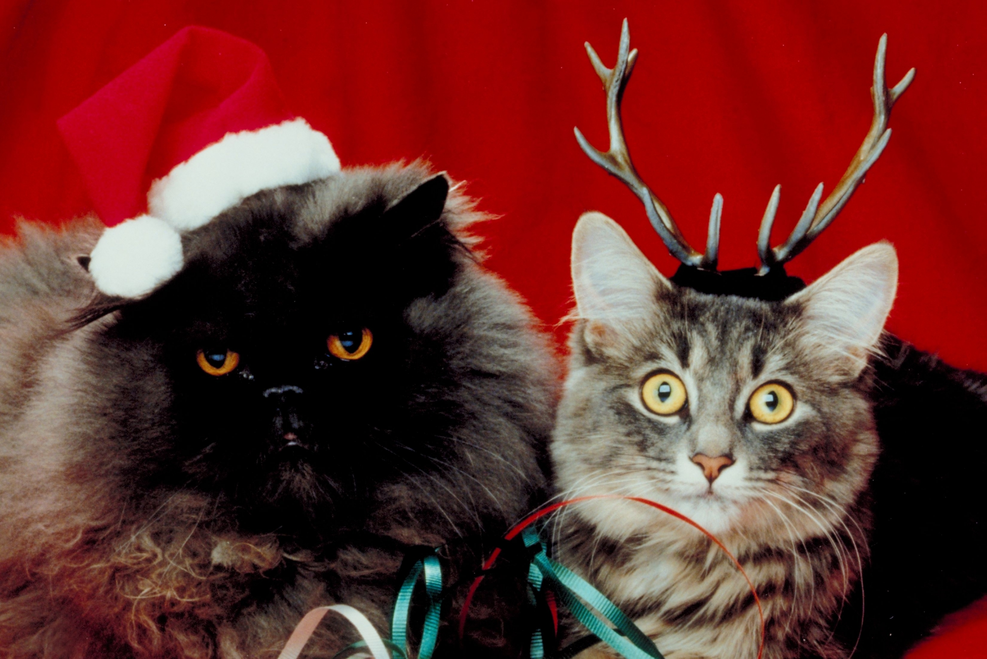 Новогодние Коты от Елена за 27 ноября 2014 костюм, кошаки, новый год