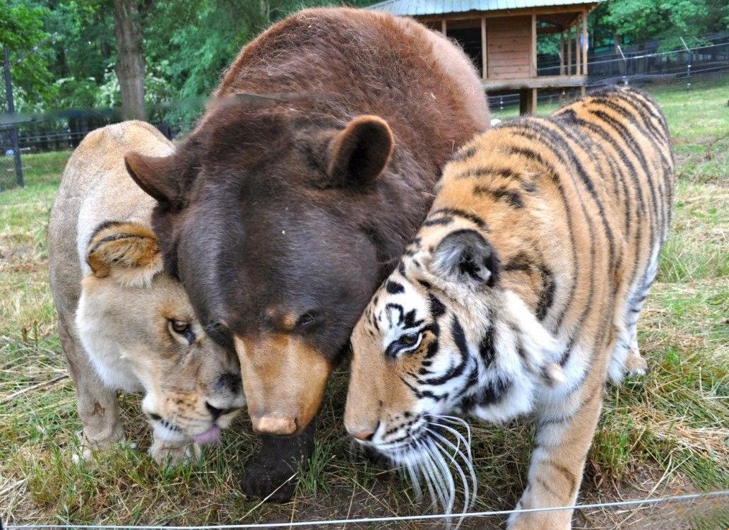 фотки дружбы животных